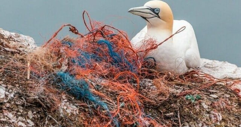 Fishing nets pollution